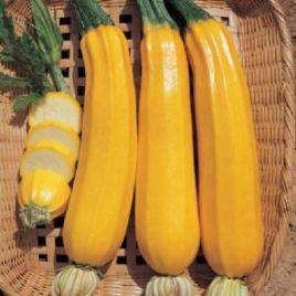 Мериголд F1 семена кабачка раннего 40-45 дн. жёлто-оранжевого (Tezier /Clause)