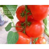 Мелодия F1 семена томата индет (DRS-Seminis)