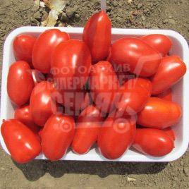 Инкас F1 семена томата дет. раннего 95-105 дн. слив. 80-100 гр. (Nunhems)