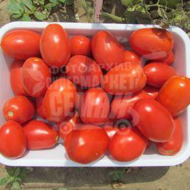 Классик F1 семена томата дет. раннего 95-105 дн. слив. 80-110 гр. (Bayer Nunhems)