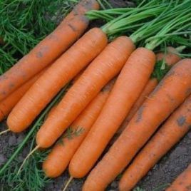 Монанта семена моркови Нантес среднеранней 100 дн. (Rijk Zwaan)