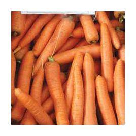 Морелия F1 семена моркови Нантес. (калибр. 1,4-1,6) средней 120 дн. (Rijk Zwaan)