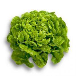 Китония семена салата тип Дуболистный зел. дражированные (Rijk Zwaan)