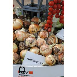 Универсо F1 семена лука репчатого среднего 115-125 дн. длинн. дня (Nunhems)