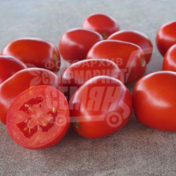 Фоккер F1 семена томата дет. дражированные (Bayer Nunhems)
