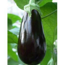 Багира F1 семена баклажана тип Алмаз среднего 100 дн. 250 гр. 12-20 см (Гавриш) НЕТ СЕМЯН