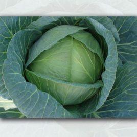 ЕЗ 1213 (EZ 1213) F1 семена капусты б/к поздней 130 дн. 6 кг окр. (Erste Zaden) НЕТ ТОВАРА