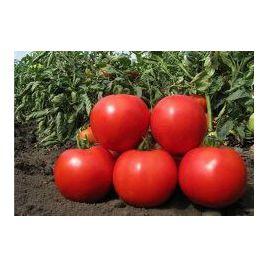 Эмир F1 семена томата индет. среднего 110-115 дн. окр. 250-300 гр. (United Genetics)