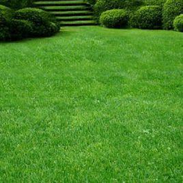 Газонная трава Парковая (DLF Trifolium)