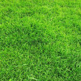 Универсальная семена газонной травы (DLF Trifolium)