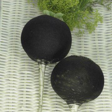Блек Спениш Раунд семена редьки (Anseme)