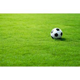 Газонная трава Спортивная (RAGT)