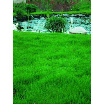 Газонная трава Быстрорастущая (RAGT)