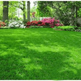 Тенеустойчивая семена газонной травы (RAGT) НЕТ СЕМЯН