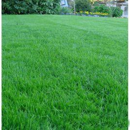 Газонная трава Универсальная (RAGT)
