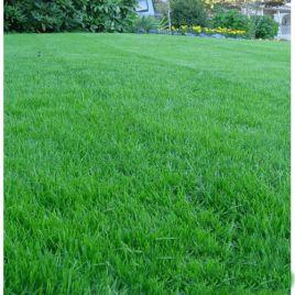 Универсальная семена газонной травы (RAGT) НЕТ СЕМЯН