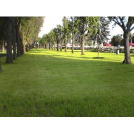 Газонная трава Парковая (RAGT)