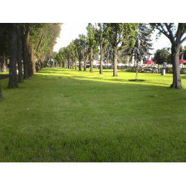 Парковая семена газонной травы (RAGT) НЕТ СЕМЯН