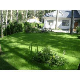 Газонная трава Декоративная (RAGT)