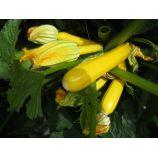 Мери Голд F1 семена кабачка (Dorsing Seeds)