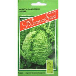 Рана Жлута (Отава) семена капусты савойской ранней 70-75 дн (Moravoseed)