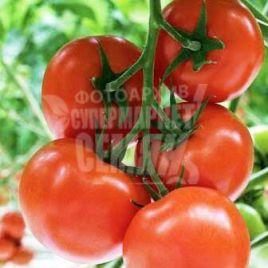 Беллавиза F1 семена томата индет. ультрараннего 90-95 дн. окр. 160-170 гр. (Rijk Zwaan)