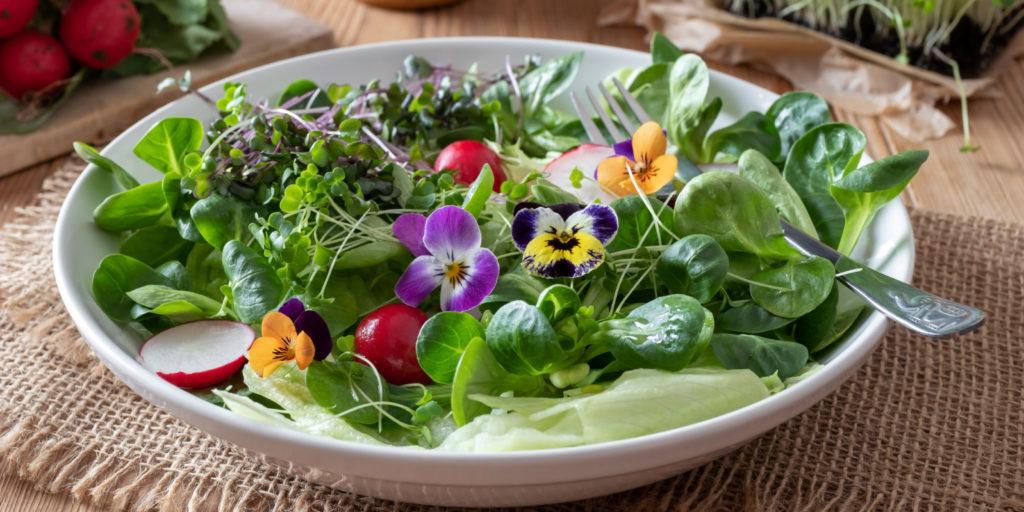 микрозелень салат съедобные цветы фото