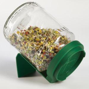 микрозелень в банке выращивание фото проращивание