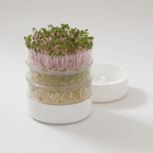 проращиватель микрозелени фото