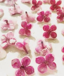фото засахаренных съедобных цветов сирени