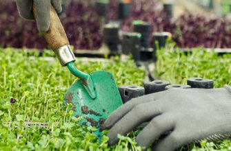 микрозелень как бизнес