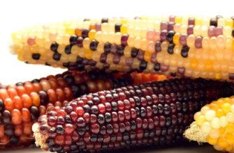 фото кукуруза попкорн
