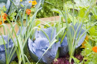 цветы и овощи фотография