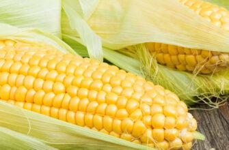 фото сахарная кукуруза