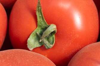 фото томат