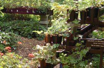 фото домашний сад