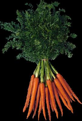 Купить семена моркови всех видов