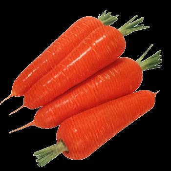 оформить заказ на семена моркови Ф1