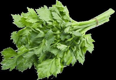 семена листового сельдерея