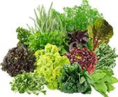Купить семена зеленопряных культур