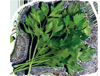 семена кориандра или кинзы