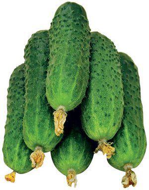 Купить семена самоопыляемых огурцов
