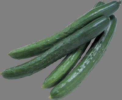 семена огурцов с длинными плодами