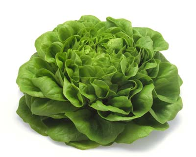 Купить семена салата