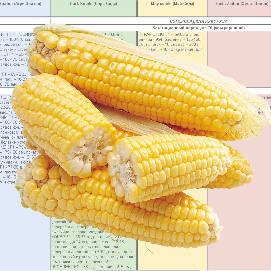 Купить каталог сахарной кукурузы