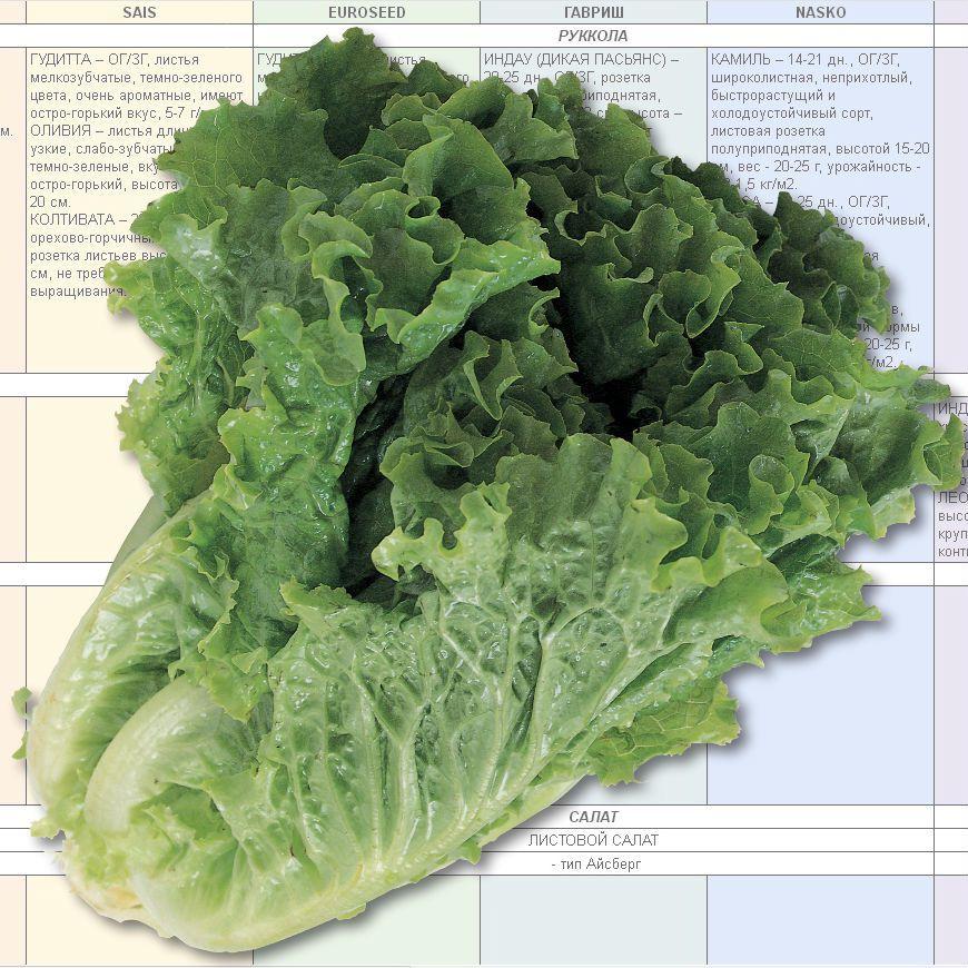 Купить электронный каталог салатных культур