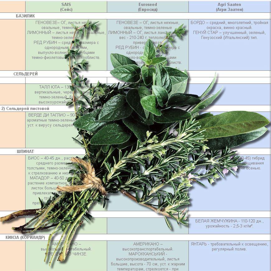Купить электронный каталог зеленопрямых