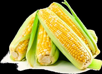 оформить заказ на семена кукурузы