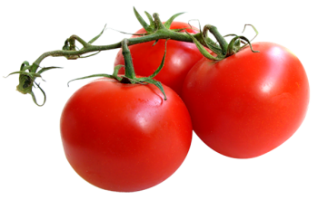 каталог круглых томатов