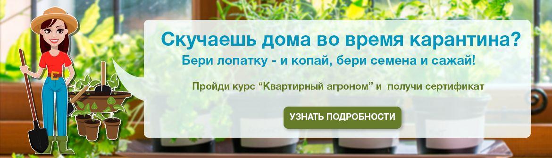 Квартирный агроном